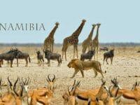 Viaggio in Namibia: il safari